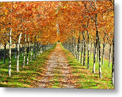 Autumn Tree Metal Print by Julien Fourniol/Baloulumix