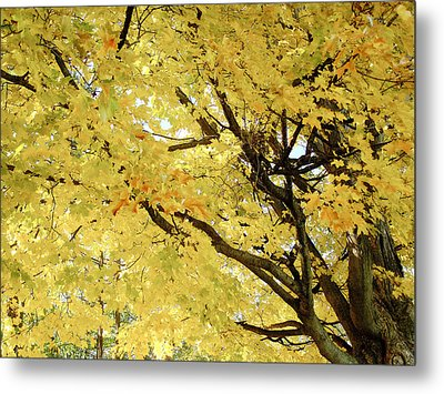 Metal Print featuring the photograph Autumn Tree by Raymond Earley