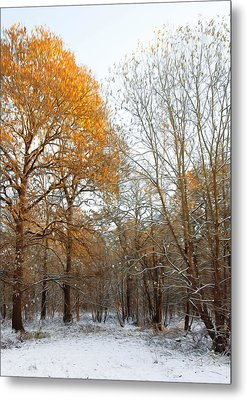 Autumn Tree Metal Print by Svetlana Sewell