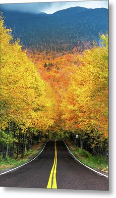 Autumn Tree Tunnel Metal Print