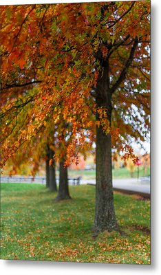 Metal Print featuring the photograph Autumn Trees In A Row by April Reppucci