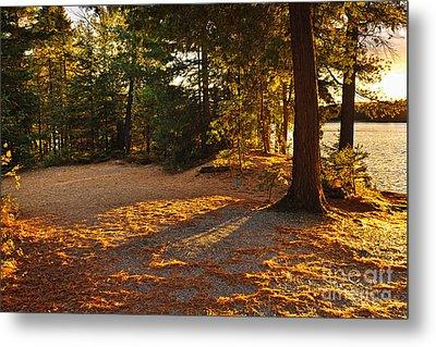 Autumn Trees Near Lake Metal Print by Elena Elisseeva