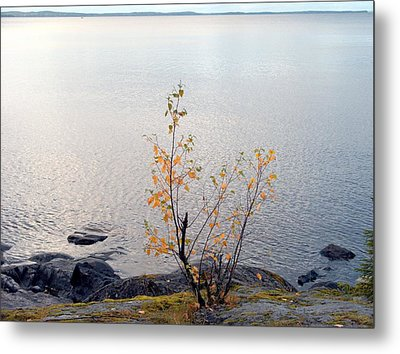 Metal Print featuring the photograph Autumn View 3 by Sami Tiainen