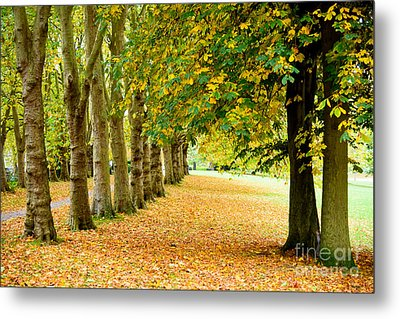 Metal Print featuring the photograph Autumn Walk by Colin Rayner