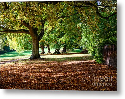 Autumn Walk In The Park Metal Print by Colin Rayner