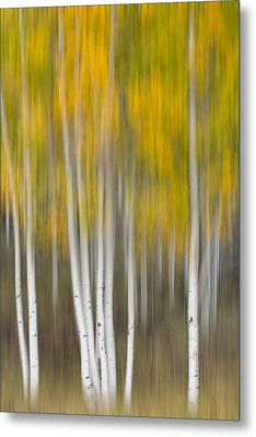 Metal Print featuring the photograph Autumn Was A Blur by Patricia Davidson