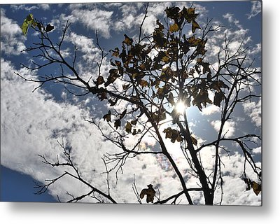 Autumn Yellow Back-lit Tree Branch Metal Print