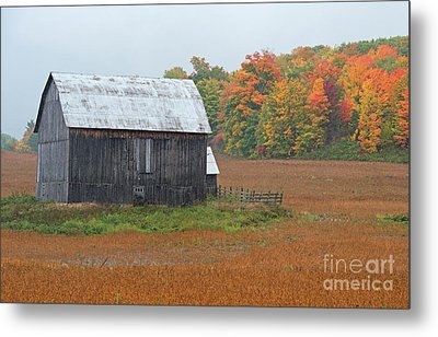 Metal Print featuring the photograph Autumnal.. by Nina Stavlund