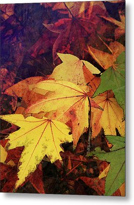 Autumns Colors Metal Print by Robert Ball
