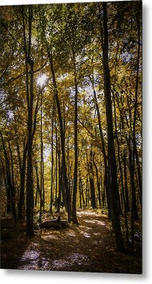 Autumns Fire Metal Print by Scott Norris