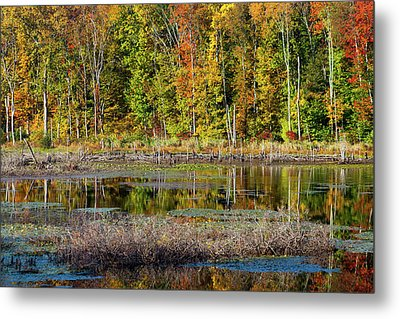 Metal Print featuring the photograph Autumns Quiet Moment by Karol Livote