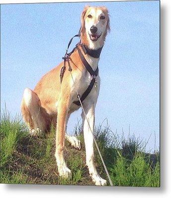 Ava-grace, Princess Of Arabia  #saluki Metal Print by John Edwards