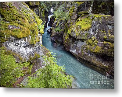 Avalanche Gorge In Glacier National Park Metal Print