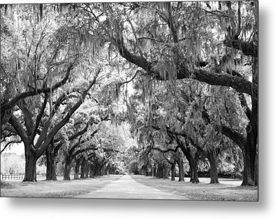 Avenue Of Oaks Charleston South Carolina Metal Print by Stephanie McDowell