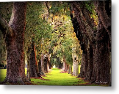 Avenue Of Oaks Sea Island Golf Club St Simons Island Georgia Art Metal Print by Reid Callaway