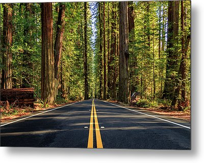 Avenue Of The Giants Metal Print by James Eddy
