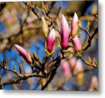 Awaking From Hibernation Metal Print by Frozen in Time Fine Art Photography