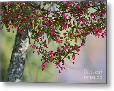Metal Print featuring the photograph Awe... Spring by Brenda Bostic