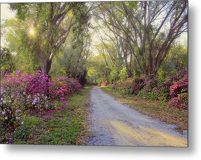 Azalea Lane By H H Photography Of Florida Metal Print by HH Photography of Florida