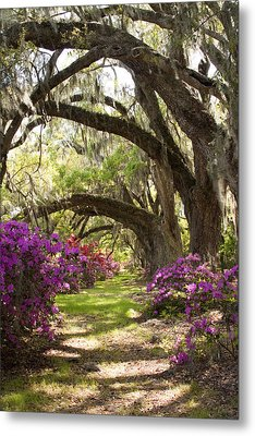 Azaleas And Live Oaks At Magnolia Plantation Gardens Metal Print by Dustin K Ryan