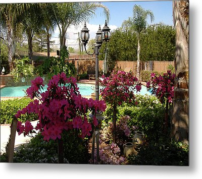 Azaleas In Bloom Metal Print by Diane Ferguson