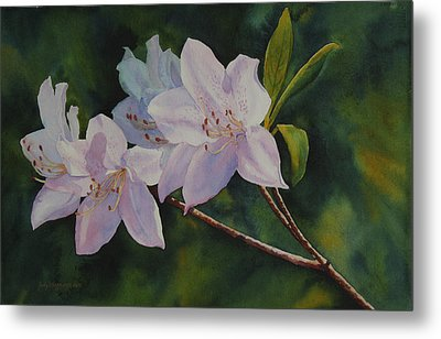 Azaleas Metal Print by Judy Mercer