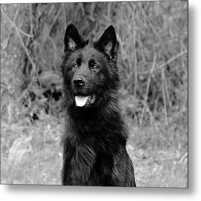 Metal Print featuring the photograph Aziza  by Sandy Keeton