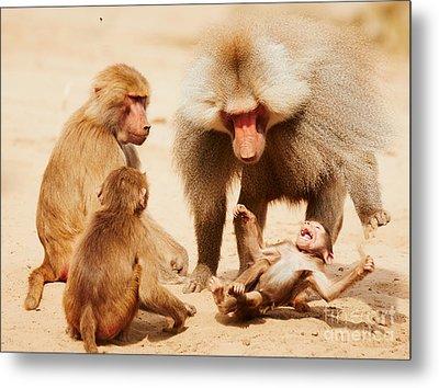 Baboon Family Having Fun In The Desert Metal Print