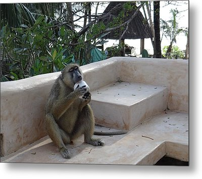 Baboon With A Sweet Tooth Metal Print by Exploramum Exploramum