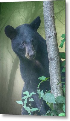 Baby Bear Takes A Peek Metal Print