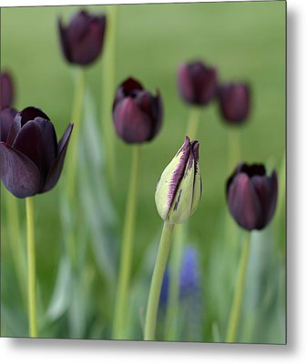 Metal Print featuring the photograph Baby Bloomer by Linda Mishler