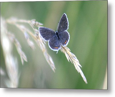 Metal Print featuring the photograph Baby Blue by David Dunham