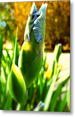Baby Blue Ladybug Perch  Metal Print by ARTography by Pamela Smale Williams