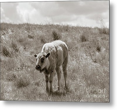 Metal Print featuring the photograph Baby Buffalo In Field With Sky by Rebecca Margraf