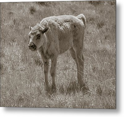 Metal Print featuring the photograph Baby Buffalo by Rebecca Margraf