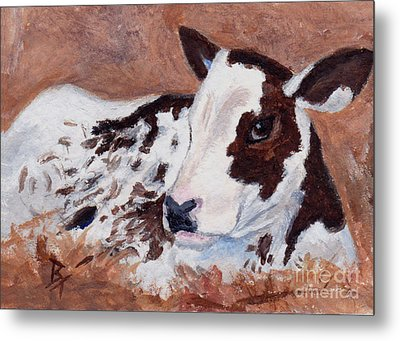 Baby Cow Aceo Metal Print by Brenda Thour