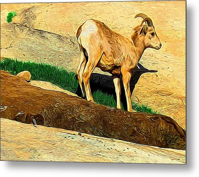 Baby Desert Bighorn In Abstract Metal Print