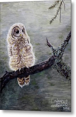 Baby Owl Metal Print by Judy Kirouac
