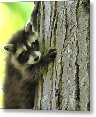 Baby Raccoon In A Tree Metal Print by Dan Sproul