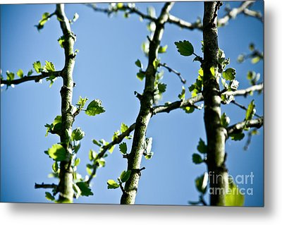 Baby Spring Tree Leaves 01 Metal Print by Ryan Kelly