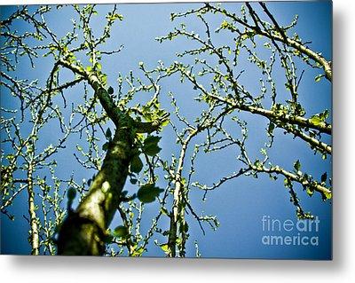 Baby Spring Tree Leaves 02 Metal Print by Ryan Kelly