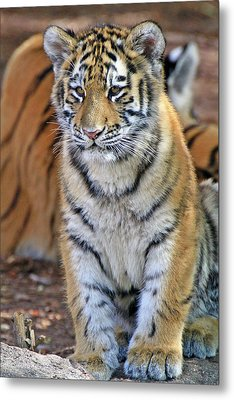 Baby Stripes Metal Print by Scott Mahon