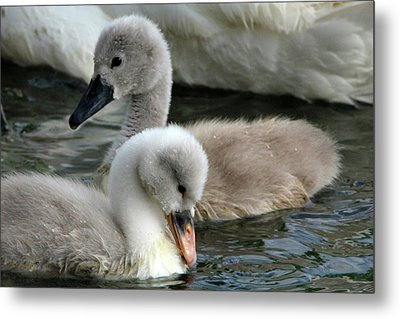 Babys Metal Print by David Stasiak