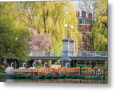 Back Bay Swans Metal Print