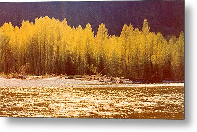 Back Lit Trees By The River Ae 2  Metal Print by Lyle Crump