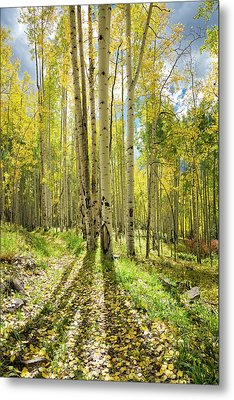 Backlit Aspen Trail Metal Print