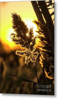 Metal Print featuring the photograph Backlit By The Sunset by Zawhaus Photography