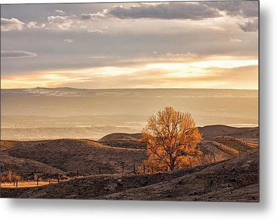 Backlit Cottonwood Metal Print