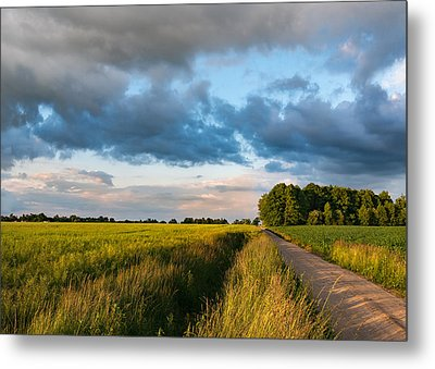 Metal Print featuring the photograph Backroad Between The Fields by Dmytro Korol