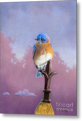 Backyard Bluebird Metal Print by Sarah Batalka